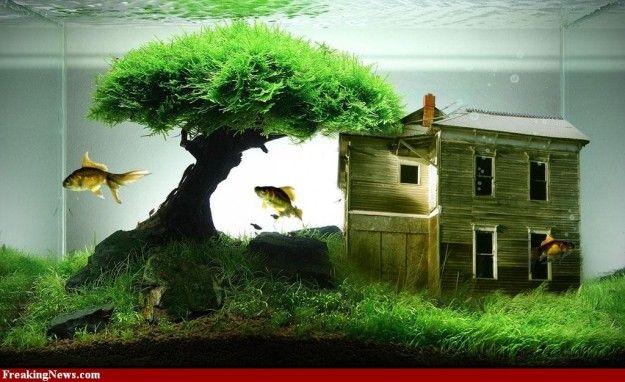 Decorazione originale acquario 17 idee fantastiche - Acquario in casa ...
