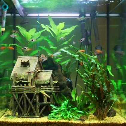 Aquarium Decoration Idee