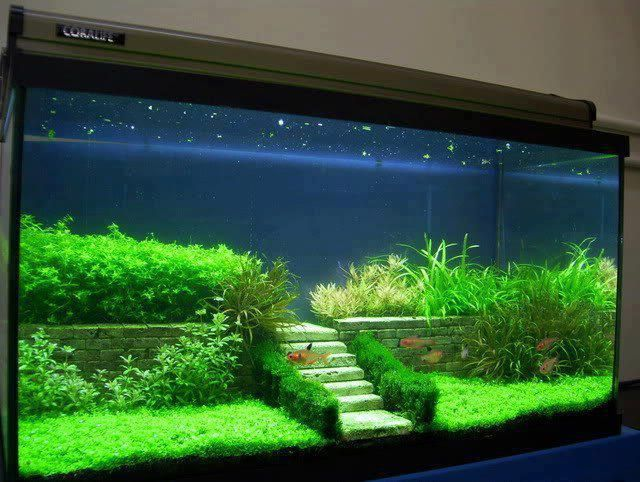 Decorazione originale acquario 17 idee fantastiche for Acquari particolari