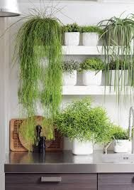 Decorare le mensole con le piante! Ecco 20 esempi...