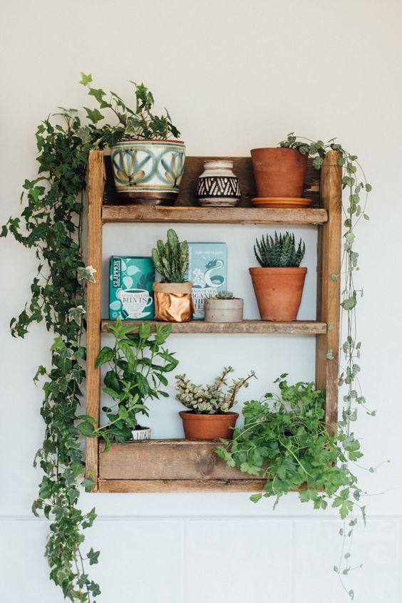 Plantes Decoration Jardin