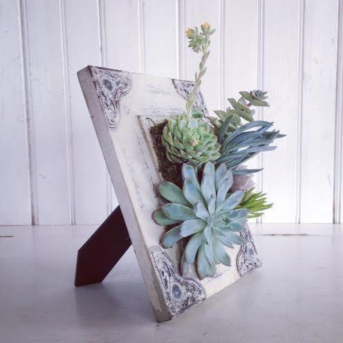 cornici-con-piante-grasse-fai-da-te-2