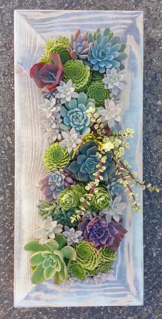 Un quadro di piante grasse