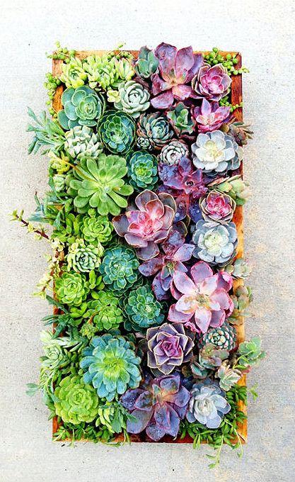 cornici-con-piante-grasse-fai-da-te-8