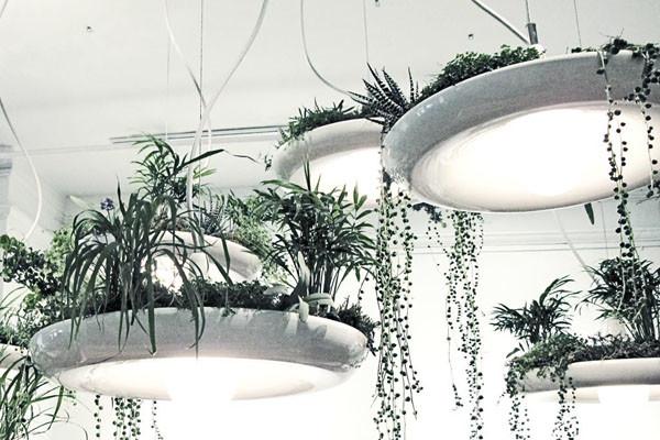 decorazioni originale piante 3