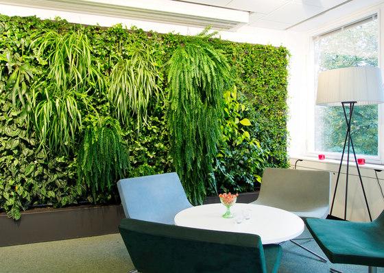 Creare una parete vegetale per decorare casa 20 idee per for Architecture vegetale