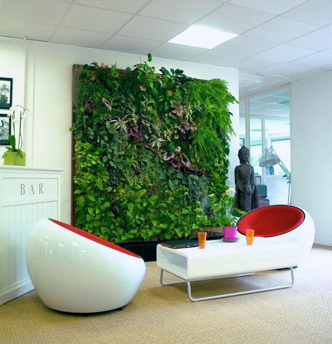Creare una parete vegetale