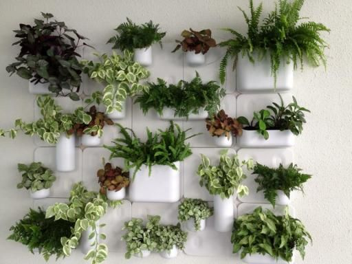 parete vegetale fai da te 8