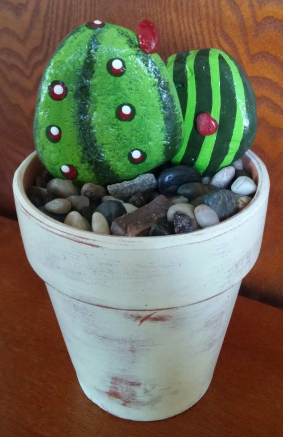 sassi cactus 19