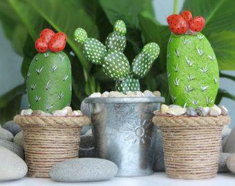 sassi cactus 3