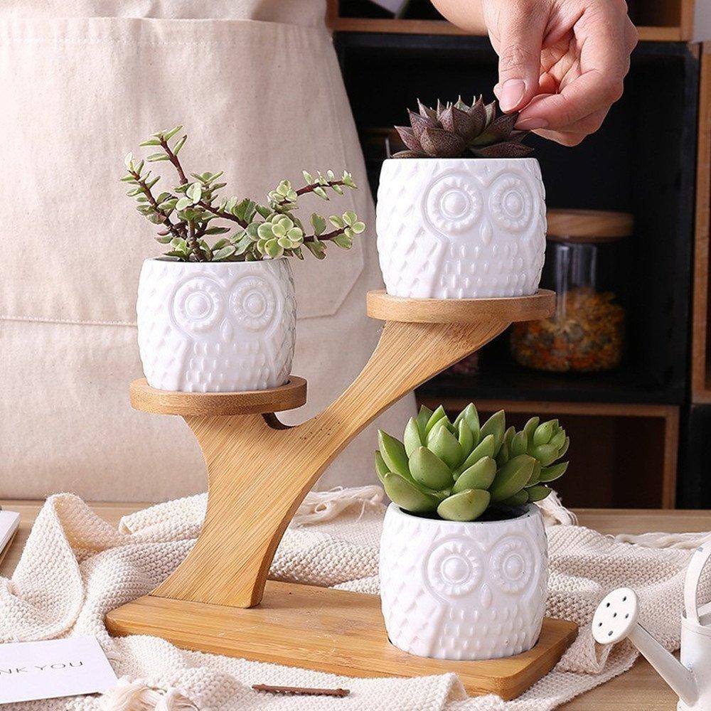 Vasi in ceramica bianca con supporto in legno, vasetti ideali per piante grasse.
